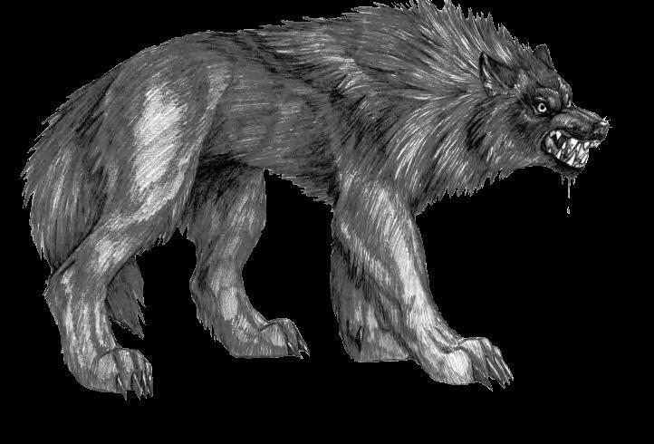 Our Werewolves Are Different  TV Tropes